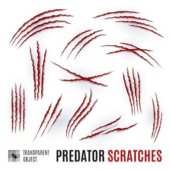Graffi di predatori