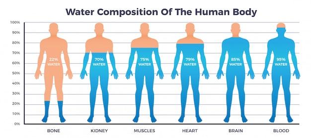 Grafico dell'acqua e del corpo con la composizione dell'acqua del corpo umano, illustrazione piana di vettore