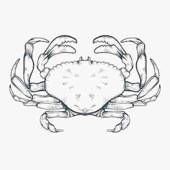 Granchio disegnato a mano linea arte illustrazione