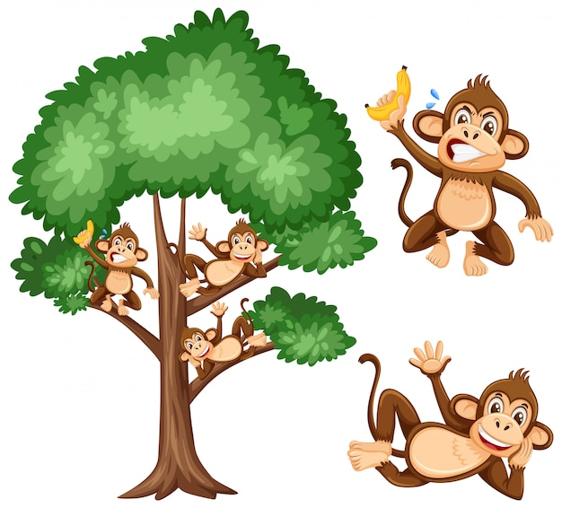Grande albero e scimmie birichine