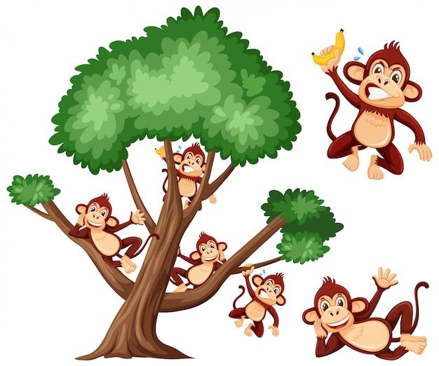 Grande albero e scimmie sveglie su bianco