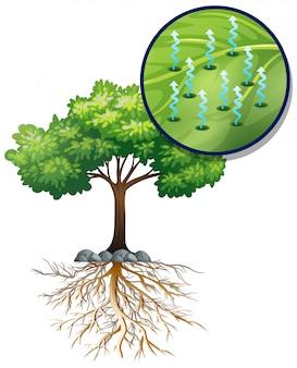 Grande albero verde e cellule vegetali vicine