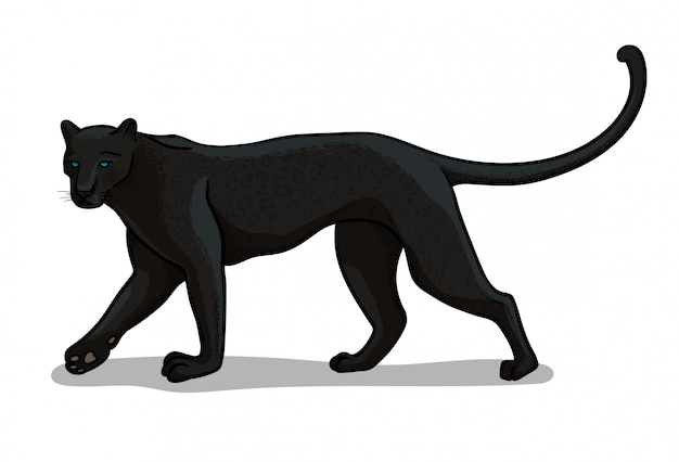 Grande gatto della pantera isolato nello stile del fumetto. illustrazione di zoologia educativa