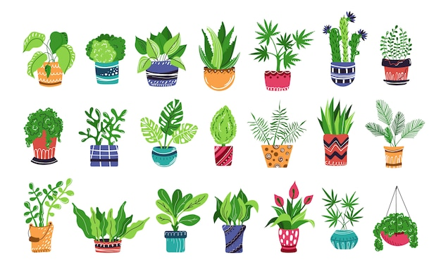 Grande insieme di piante in vaso o fiori