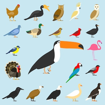 Grande insieme di uccelli tropicali, domestici e altri, cardinali, fenicotteri, gufi, aquile, calvo, mare, pappagallo, oca. corvo. passero. pollo. tacchino. cacatua. piccione. tucano tucano. bucero. grifone. anatra.
