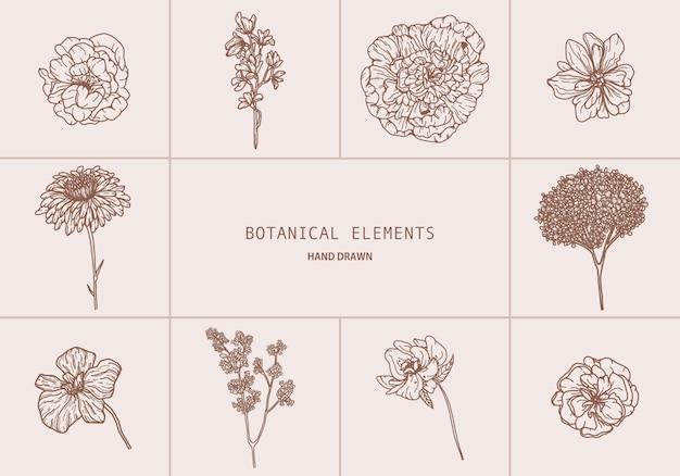 Grande insieme di vettore con stile disegnato a mano degli elementi botanici