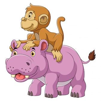 Grande ippopotamo e scimmia carina