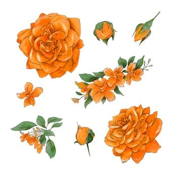 Grande set di acquerelli rose tenere di ottima qualità.