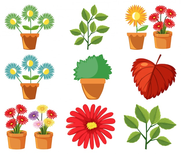 Grande set di natura con fiori e foglie