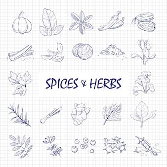 Grande set di spezie ed erbe disegnato a mano sulla pagina del taccuino