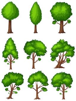 Grandi alberi verdi su fondo bianco