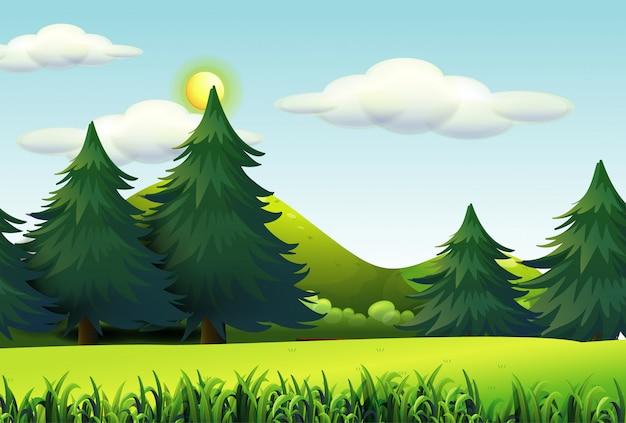 Grandi pini nel fondo della scena della natura
