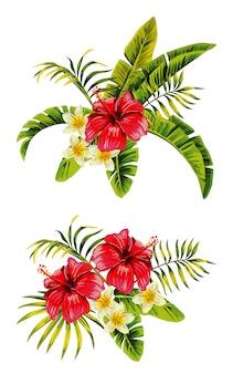Grappoli di hibiscus plumeria
