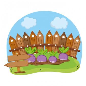 Grigliate di legno e cipolle coltivate