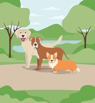 Gruppo di cani animali domestici nei personaggi del campo