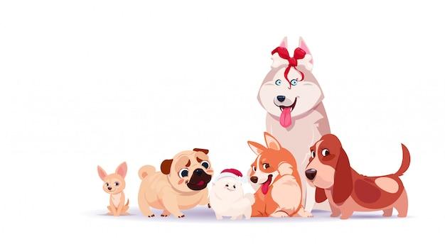 Gruppo di cani svegli che si siedono isolato su fondo bianco che porta santa hat and holding bone decorated