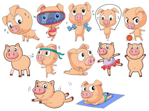 Gruppo di maiali