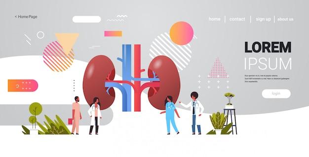 Gruppo di medici che controlla controllando orizzontale integrale dello spazio della copia di concetto della medicina di sanità dell'esame dell'organo interno umano dei reni