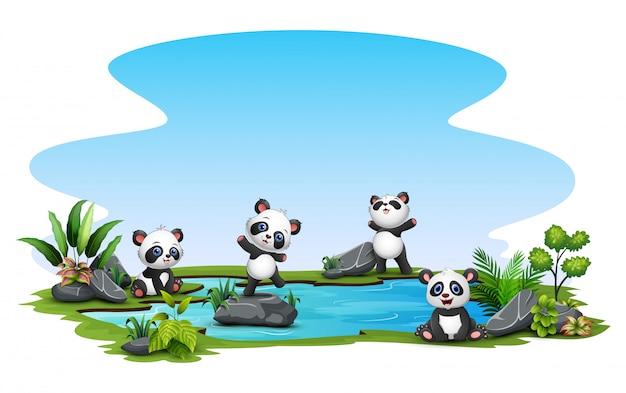 Gruppo di panda nello stagno