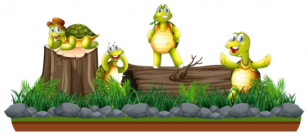 Gruppo di tartarughe in natura