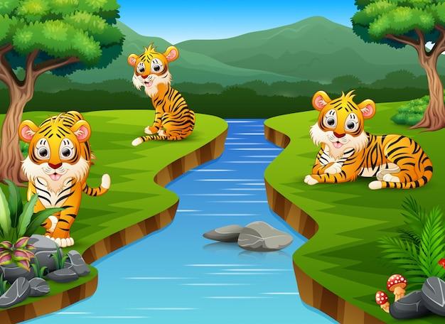 Gruppo di tigre del fumetto sulla riva del fiume