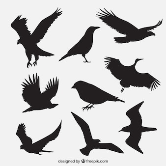 Gruppo sagome di uccelli