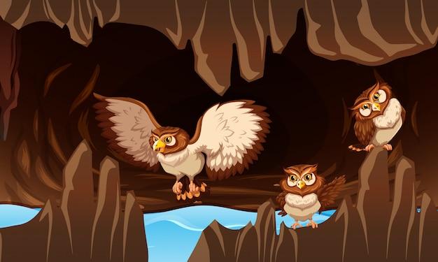 Gufi che vivono nella grotta