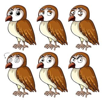 Gufo marrone con diverse espressioni facciali
