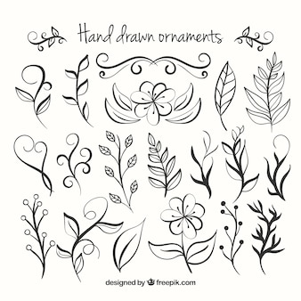 Hand drawn collection ornamenti floreali