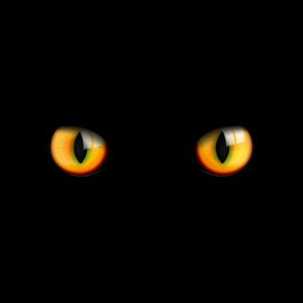 I bei occhi di gatto 3d realistici guardano nell'oscurità sul nero