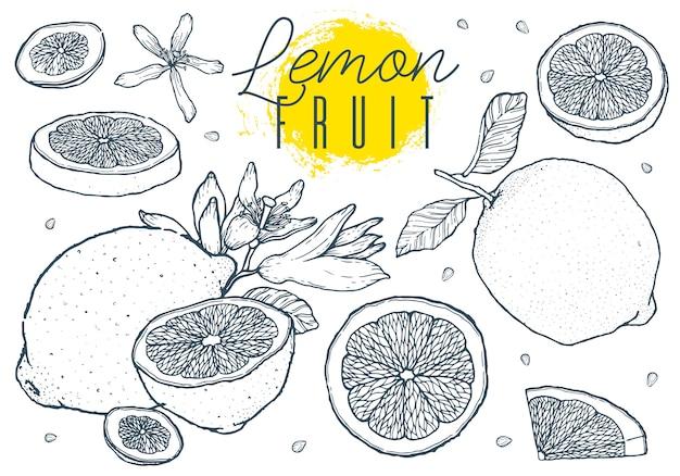 I limoni della frutta hanno messo lo schizzo disegnato a mano. stile vintage.