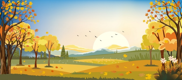 I paesaggi di panorama del campo dell'azienda agricola di autunno con acero lascia cadere dagli alberi, stagione di caduta nella sera.