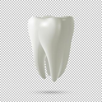 Icona del dente realistico di vettore isolato su sfondo trasparente. elemento di design concept dentale, medicina e salute.