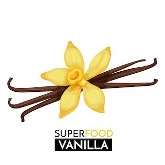 Icona di vaniglia.