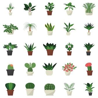 Icona piana di piante in vaso al coperto