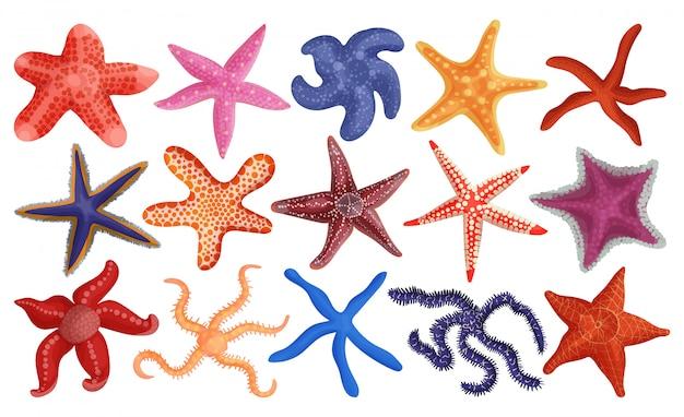 Icona stabilita del fumetto delle stelle marine del mare. illustrazione stella marina su sfondo bianco. stelle marine stabilite isolate del mare dell'icona del fumetto.