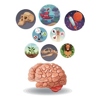 Icone circolari di colore con evoluzione del mondo dell'immagine all'interno con sopra il cervello