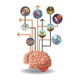 Icone circolari di colore con l'evoluzione del mondo dell'immagine collegata al cervello