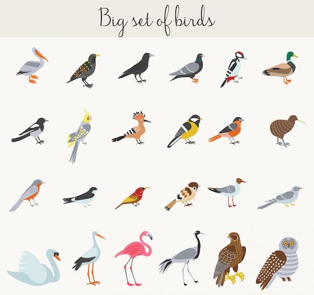 Icone dell'illustrazione degli uccelli del fumetto colorato