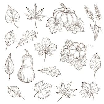 Icone di schizzo di zucche e foglie di autunno