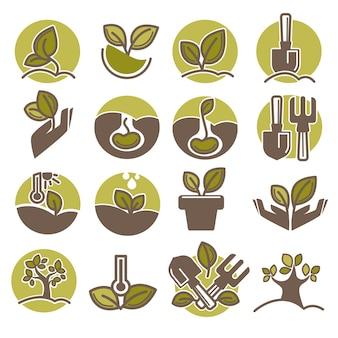 Icone di vettore infographic di piantatura e di crescita di processo dell'albero