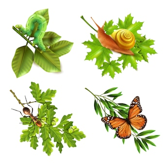 Icone realistiche di insetti