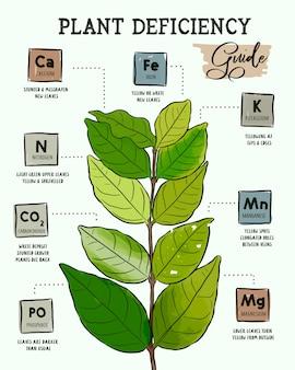 Identificazione delle carenze nutrizionali delle piante