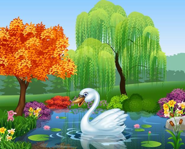Il cigno sveglio galleggia sul fiume della montagna