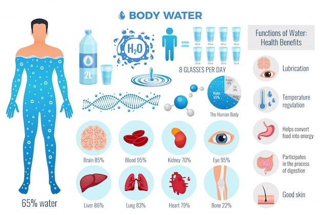 Il corpo e l'acqua hanno messo con le funzioni dell'acqua, illustrazione di vettore isolata piano