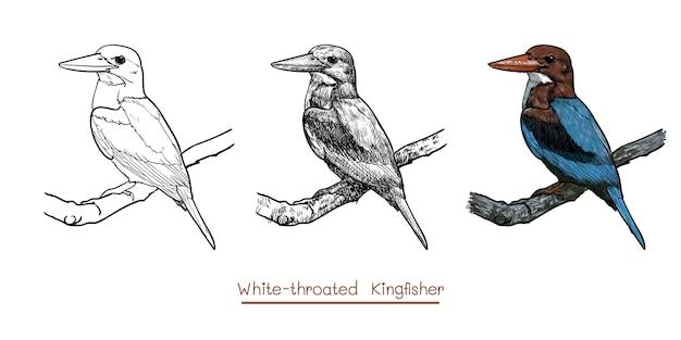 Il disegno dell'uccello dalla gola bianca del martin pescatore tiene sul ramoscello