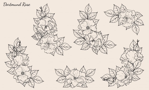 Il disegno della rosa di dortmund ha messo a mano il disegno.