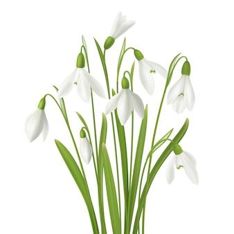 Il fiore realistico di bucaneve ha messo con il mazzo di gambi dei fiori freschi e di immagini dell'erba sull'illustrazione in bianco del fondo