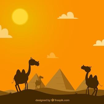 Il fondo delle piramidi dell'egitto abbellisce con la carovana dei cammelli