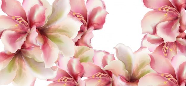Il giglio rosa fiorisce l'acquerello